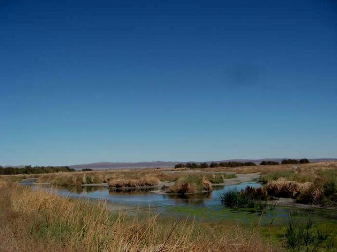 Piute Ponds (credit: Dr. Callyn Yorke)