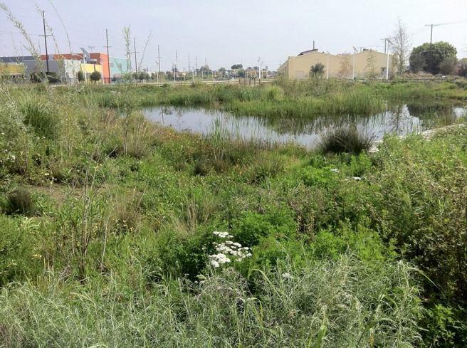 Jan Perry Wetlands