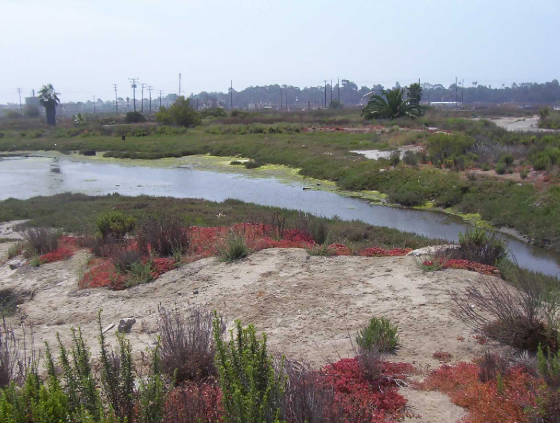 Steam Shovel Slough, Los Cerritos Wetlands, Studebaker Rd & power plant in the background (credit: CA Open Space)