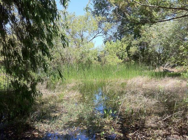 Lovely Wetlands