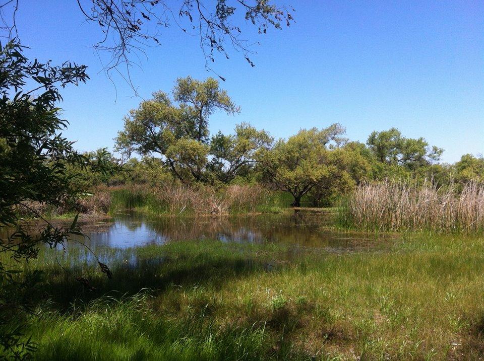 Madrona Marsh Nature Center