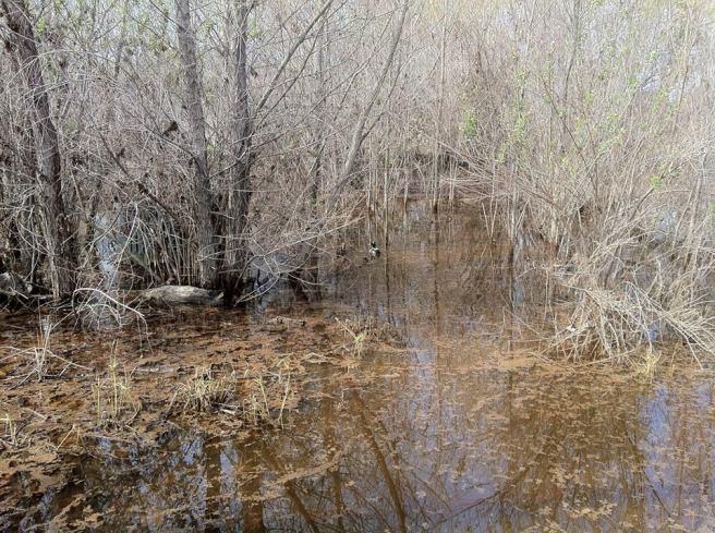 Rio de Los Angeles Wetlands