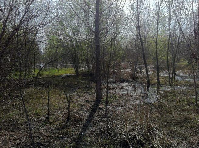 Soggy Wetlands