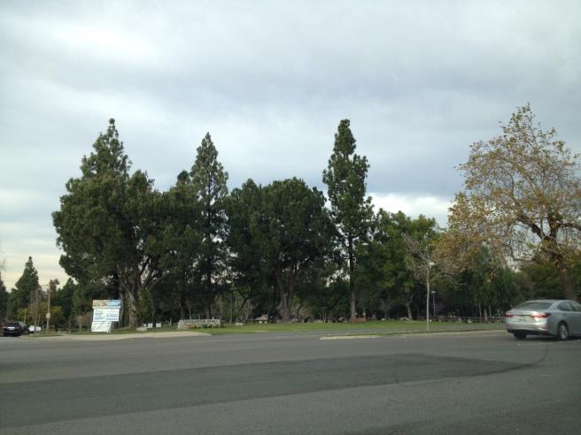 Eucalyptus Park