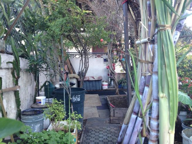 Seng's Garden 2