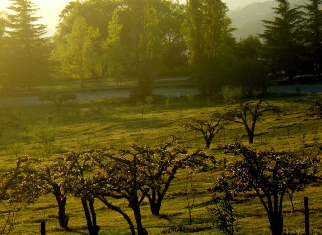 One of Oak Glen's apple orchards (Image source: Jessie Terwilliger)