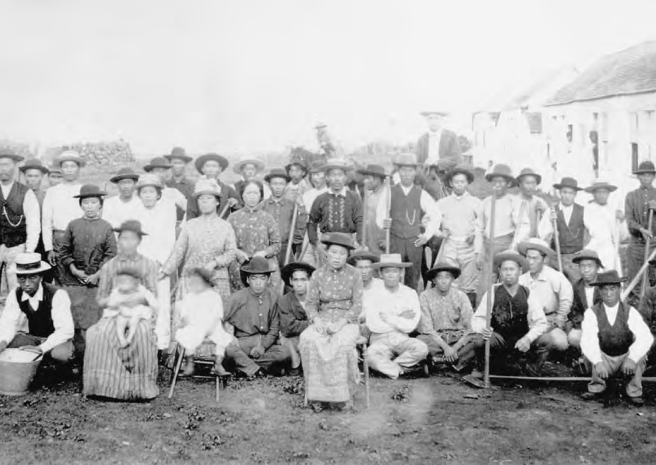 Japanese sugar plantation workers in Hawaii around 1890
