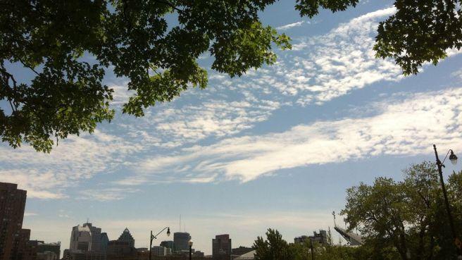 Maple skies