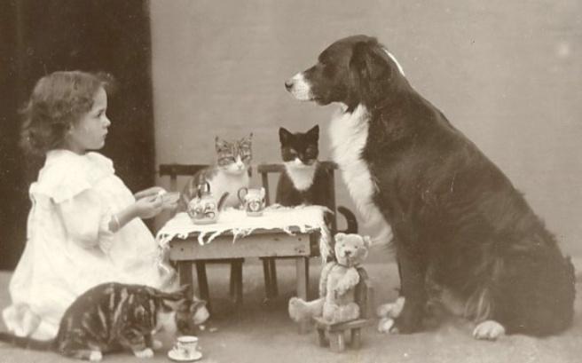 animal tea