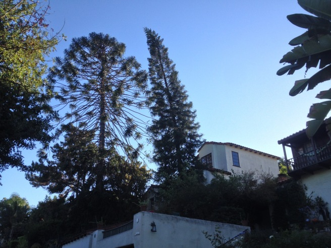 The Bunya in Silver Lake