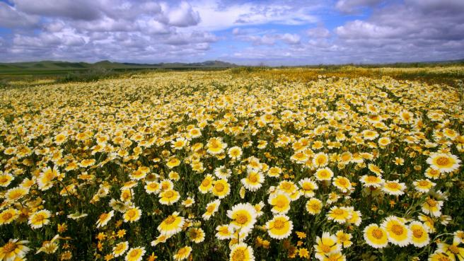 Wildflowers, Carrizo Plain National Monument, CA
