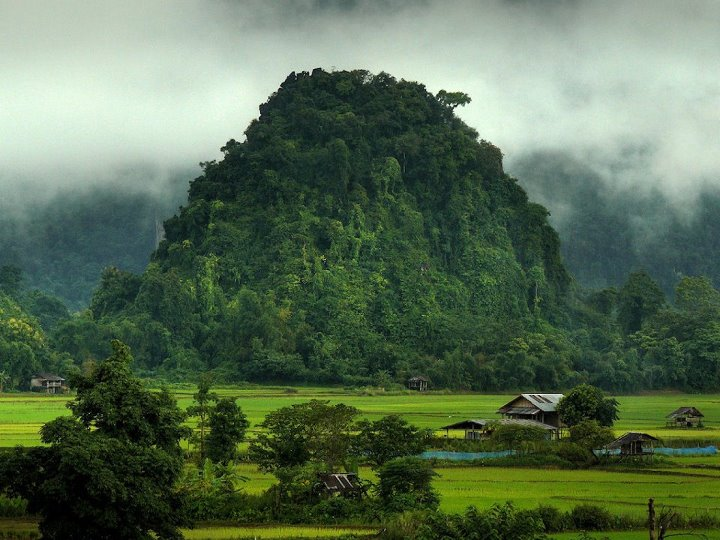 Jungle-Laos