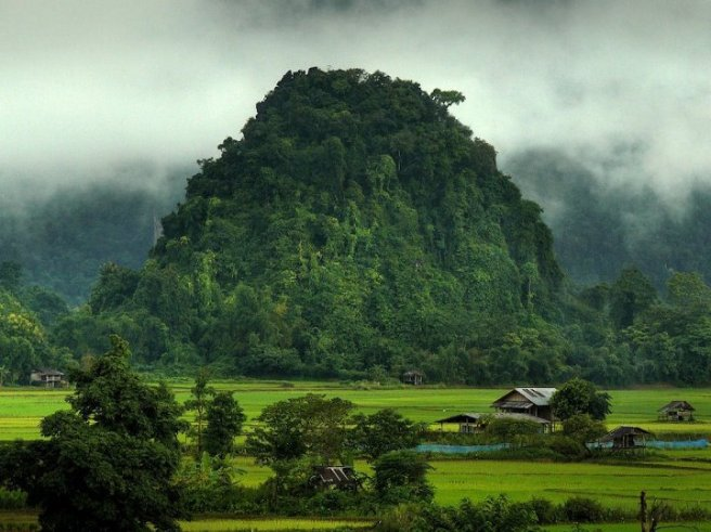 Jungle-Laos