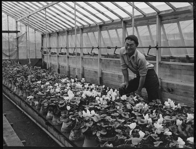 San_Leandro,_California._Greenhouse_on_nursery_operated,_before_evacuation,_by_horticultural_expert_._._._-_NARA_-_537479