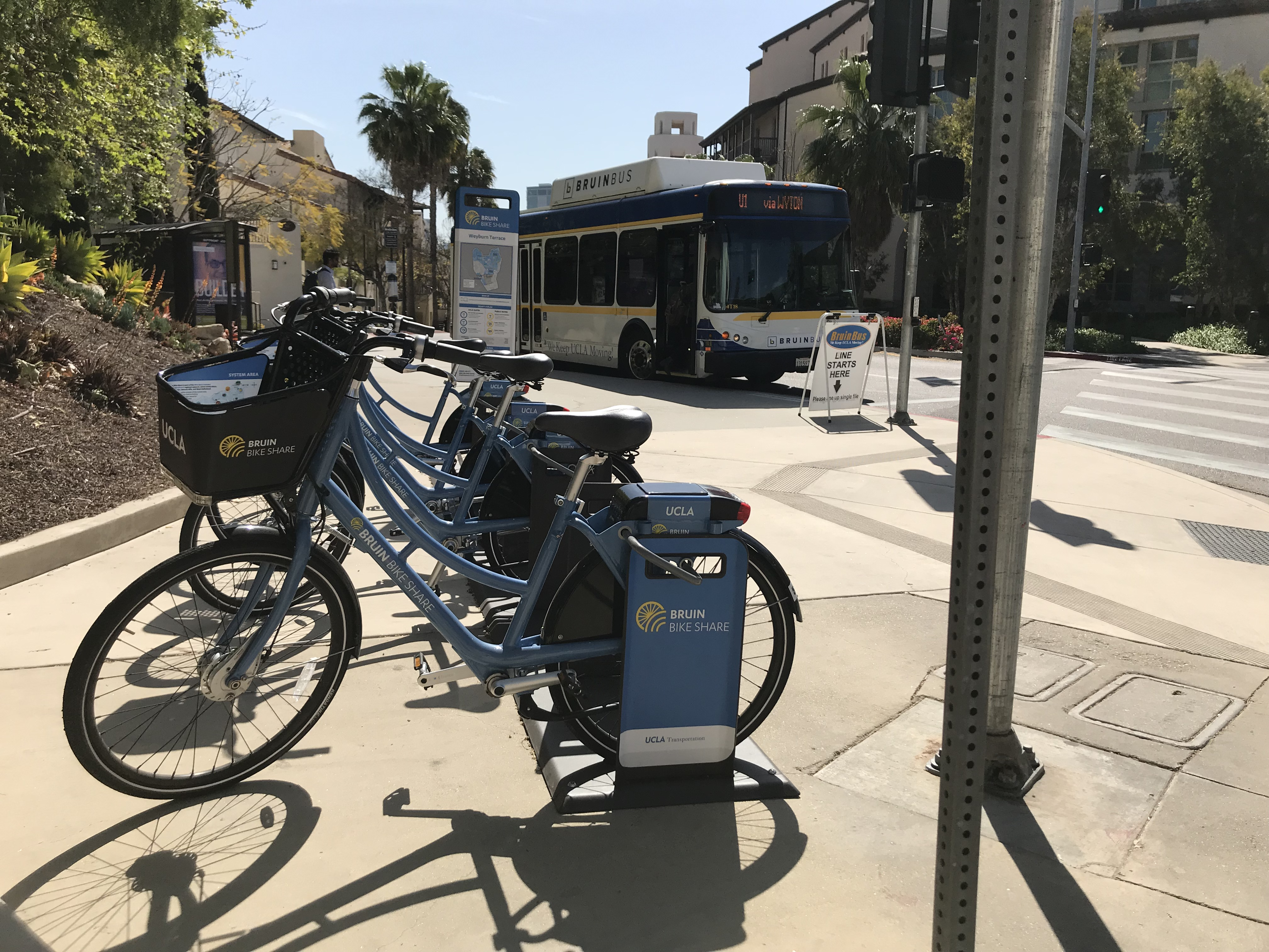 Bruin bikes and bus