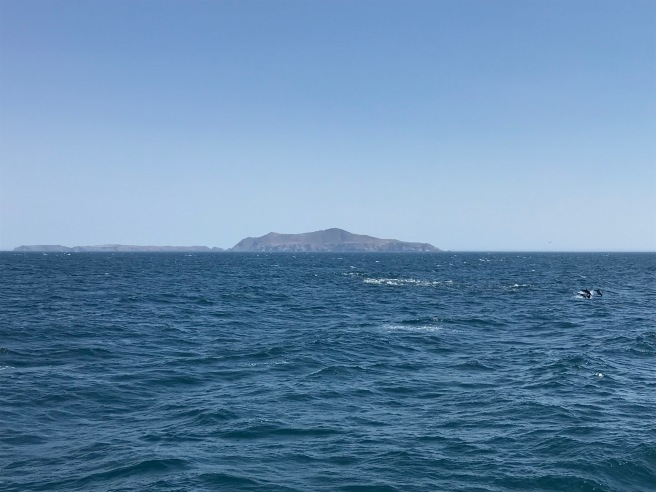 Anacapa and Dolphins